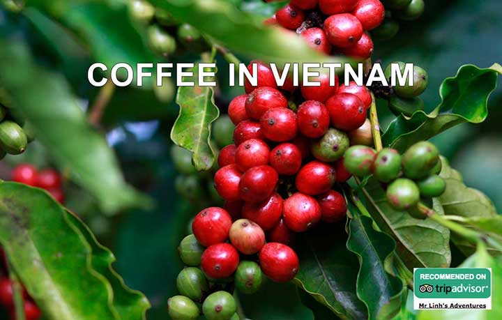 Coffee in Vietnam: the lowdown